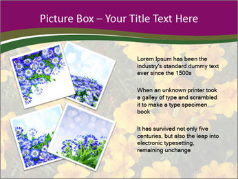 Marigold Flowers PowerPoint Templates - Slide 23