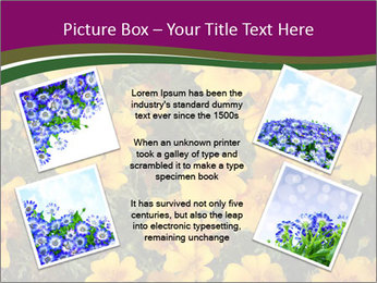 Marigold Flowers PowerPoint Templates - Slide 24