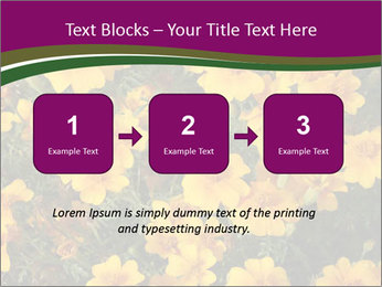 Marigold Flowers PowerPoint Templates - Slide 71