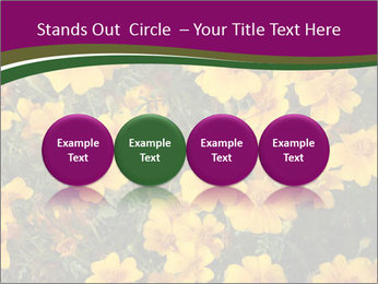 Marigold Flowers PowerPoint Templates - Slide 76