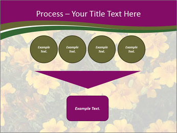 Marigold Flowers PowerPoint Templates - Slide 93