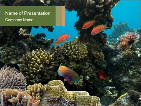 Underwater Life PowerPoint Template
