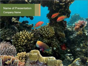 Underwater Life PowerPoint Templates - Slide 1