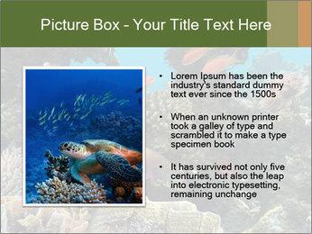 Underwater Life PowerPoint Templates - Slide 13