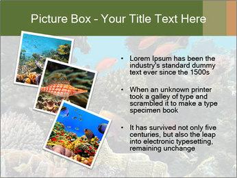 Underwater Life PowerPoint Templates - Slide 17