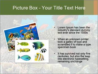 Underwater Life PowerPoint Templates - Slide 20
