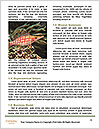 0000089469 Word Templates - Page 4