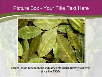 Fresh Herbs PowerPoint Templates - Slide 15