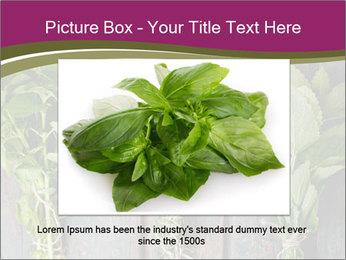 Fresh Herbs PowerPoint Templates - Slide 16