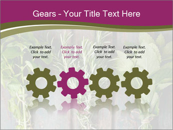 Fresh Herbs PowerPoint Templates - Slide 48