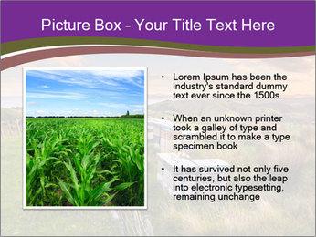Beekeeping PowerPoint Template - Slide 13