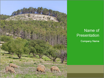 Sheep In Mountains PowerPoint Template - Slide 1