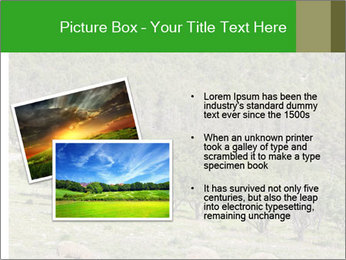 Sheep In Mountains PowerPoint Template - Slide 20