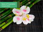 White Orchid PowerPoint Template