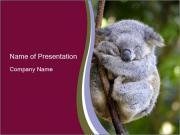 Wild Koala PowerPoint Template