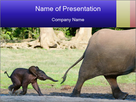 Baby Elephant Powerpoint Template Backgrounds Id 0000089610