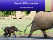 Baby Elephant PowerPoint Template