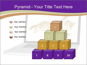 Cat Laptop Wallpaper PowerPoint Template - Slide 31