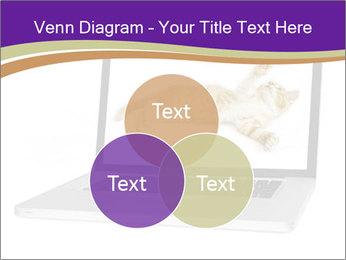 Cat Laptop Wallpaper PowerPoint Template - Slide 33