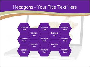 Cat Laptop Wallpaper PowerPoint Template - Slide 44