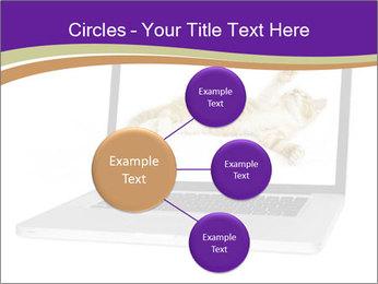 Cat Laptop Wallpaper PowerPoint Template - Slide 79