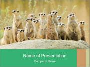 African Animals PowerPoint Template