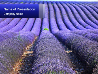 Purple Lavander Field PowerPoint Template - Slide 1