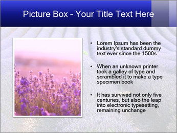 Purple Lavander Field PowerPoint Template - Slide 13