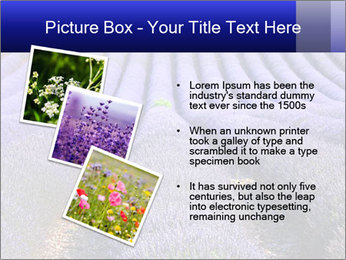 Purple Lavander Field PowerPoint Template - Slide 17