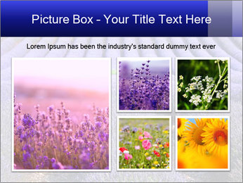 Purple Lavander Field PowerPoint Template - Slide 19