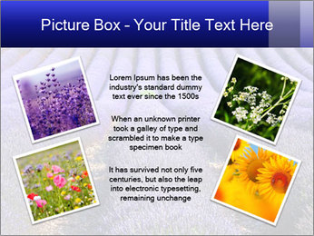 Purple Lavander Field PowerPoint Template - Slide 24