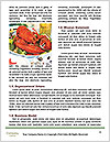 0000089666 Word Template - Page 4