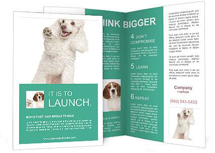 0000089671 Brochure Template