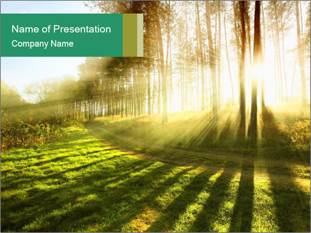 Sunshine In Forest PowerPoint Template