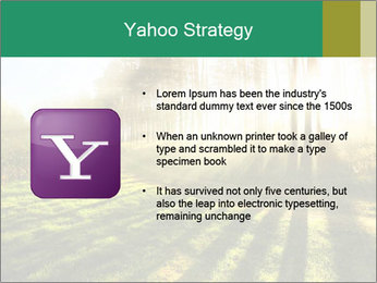 Sunshine In Forest PowerPoint Template - Slide 11