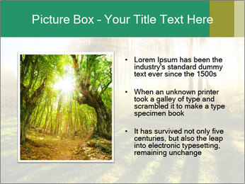 Sunshine In Forest PowerPoint Template - Slide 13