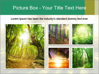 Sunshine In Forest PowerPoint Template - Slide 19