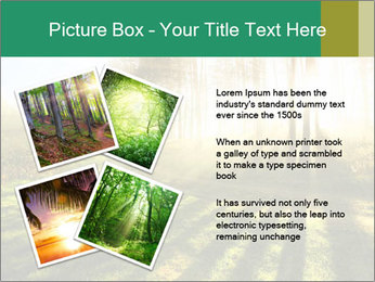 Sunshine In Forest PowerPoint Template - Slide 23