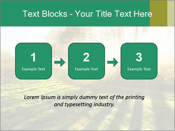 Sunshine In Forest PowerPoint Template - Slide 71