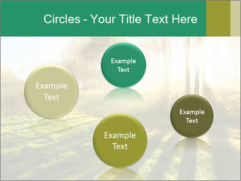 Sunshine In Forest PowerPoint Template - Slide 77