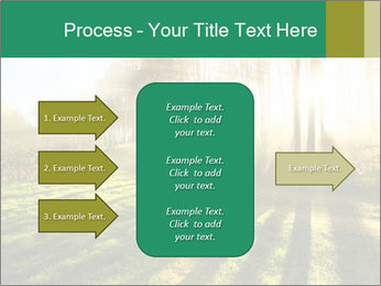 Sunshine In Forest PowerPoint Template - Slide 85