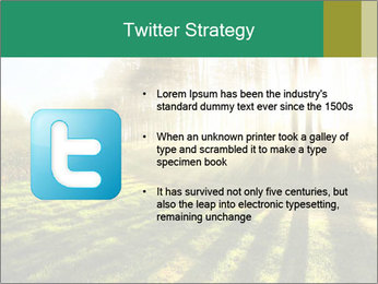 Sunshine In Forest PowerPoint Template - Slide 9