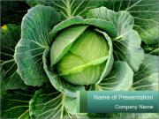 Fresh Green Cabbage PowerPoint Template