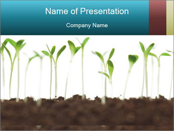 New Sprouts PowerPoint Template - Slide 1