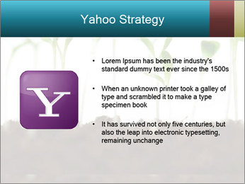 New Sprouts PowerPoint Template - Slide 11