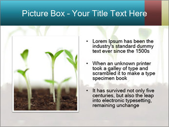 New Sprouts PowerPoint Template - Slide 13
