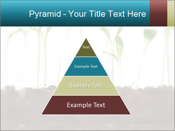 New Sprouts PowerPoint Template - Slide 30