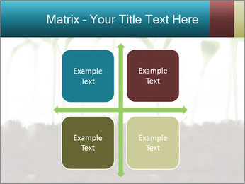 New Sprouts PowerPoint Template - Slide 37