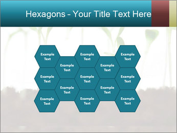 New Sprouts PowerPoint Template - Slide 44
