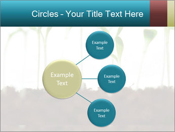 New Sprouts PowerPoint Template - Slide 79